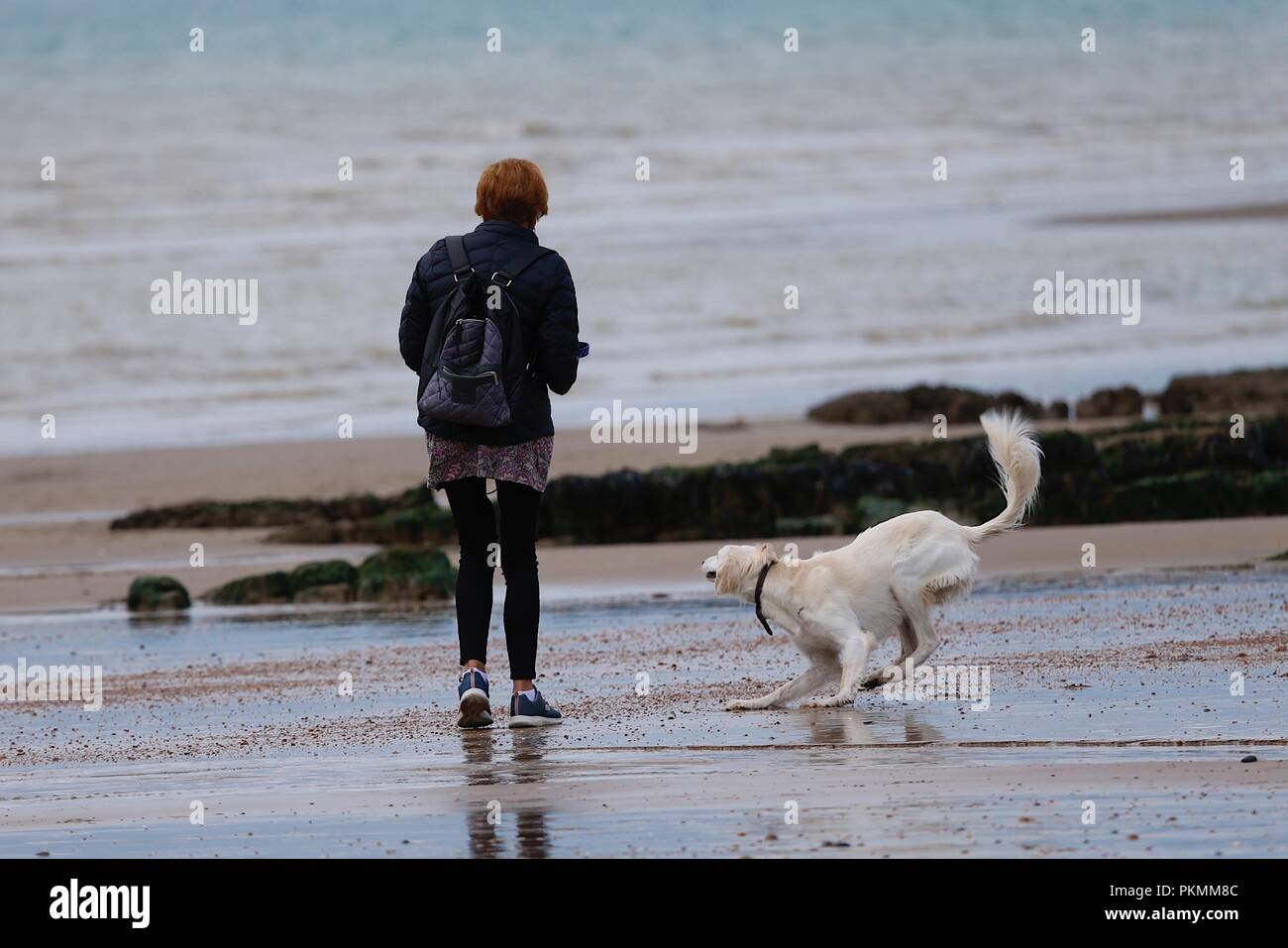 Hastings, East Sussex, UK. 14th Sep, 2018. UK Weather: Cloudy with a drop in temperature but pleasant morning in the seaside town of Hastings. A woman takes her playful dog for a walk along the beach. © Paul Lawrenson 2018, Photo Credit: Paul Lawrenson / Alamy Live News - Stock Image