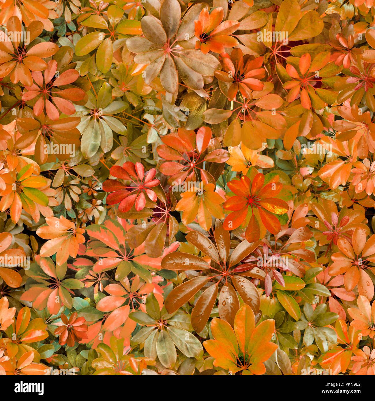 Seamless pattern, leaves, summer, orange, heat, flora, wallpaper pattern, pattern for textiles, postcard, nobody, design, image, photo - Stock Image