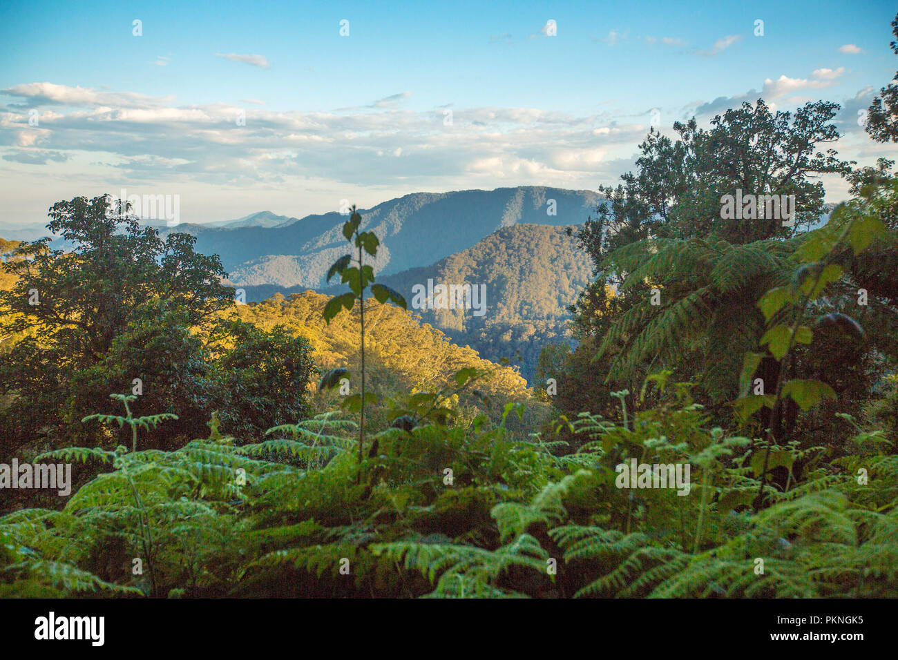 View of steep and forested peaks of Great Dividing Range rising into blue sky near Dorrigo in northern NSW Australia - Stock Image