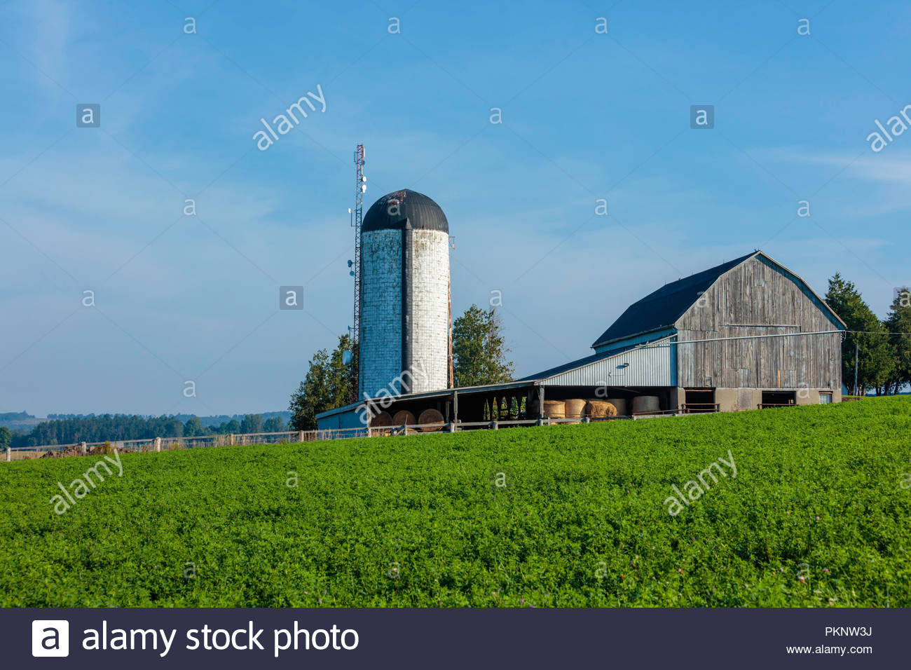 Grain storage silo and timber framed barn with lean-to addition storing fodder near Bowmanville Ontario Canada - Stock Image