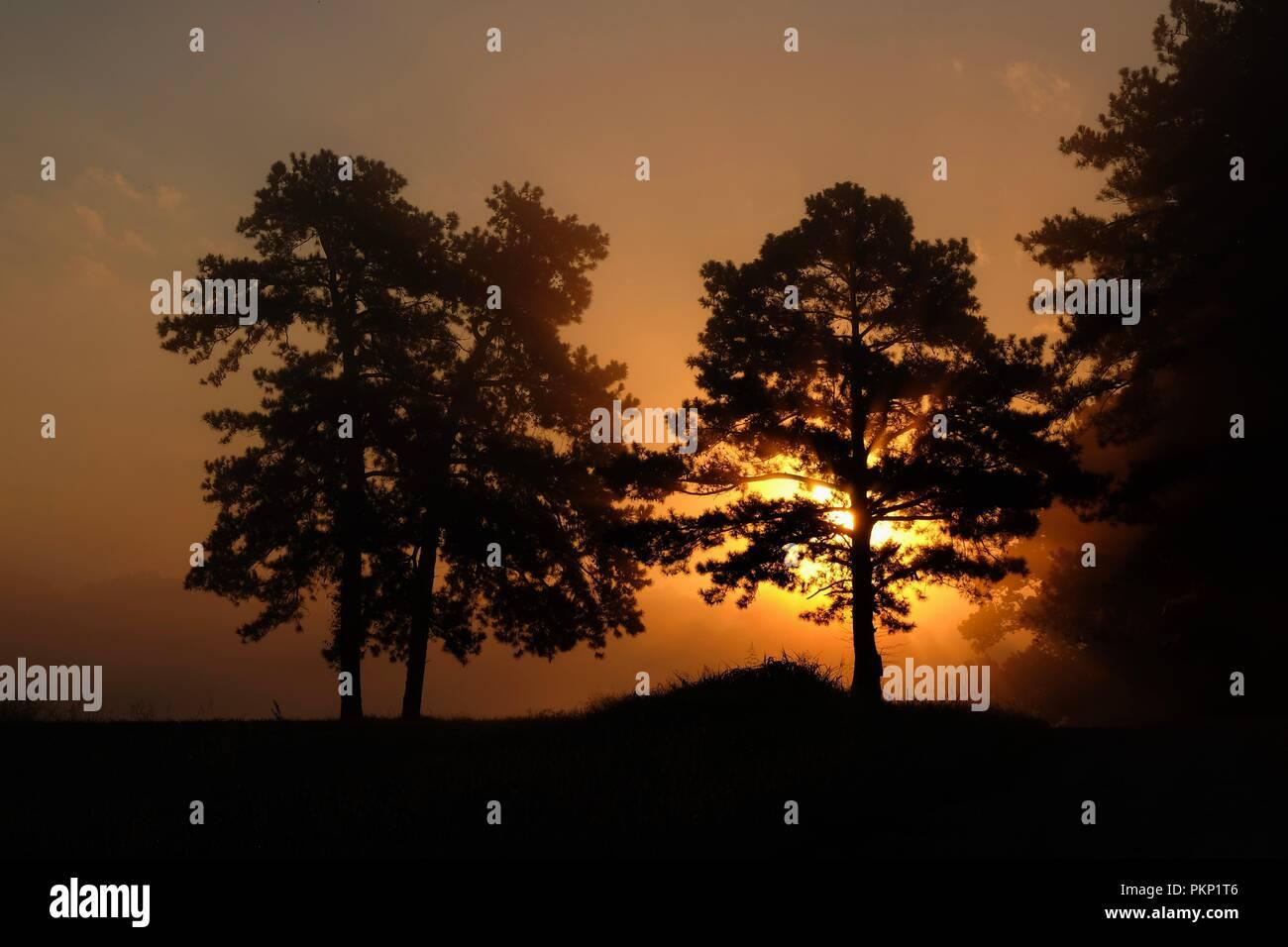 Beautiful foggy sunrise, as sun rays  infiltrate through the tree canopies. Raleigh North Carolina - Stock Image