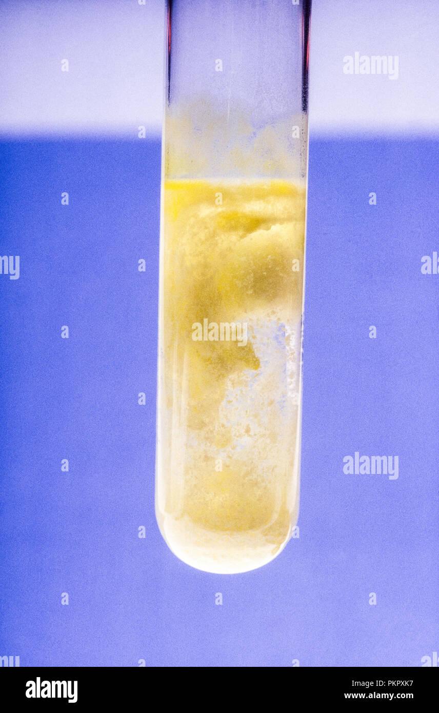 Barium Chromate Ppt. from addition of Potassium Chromate to Barium Chloride. - Stock Image