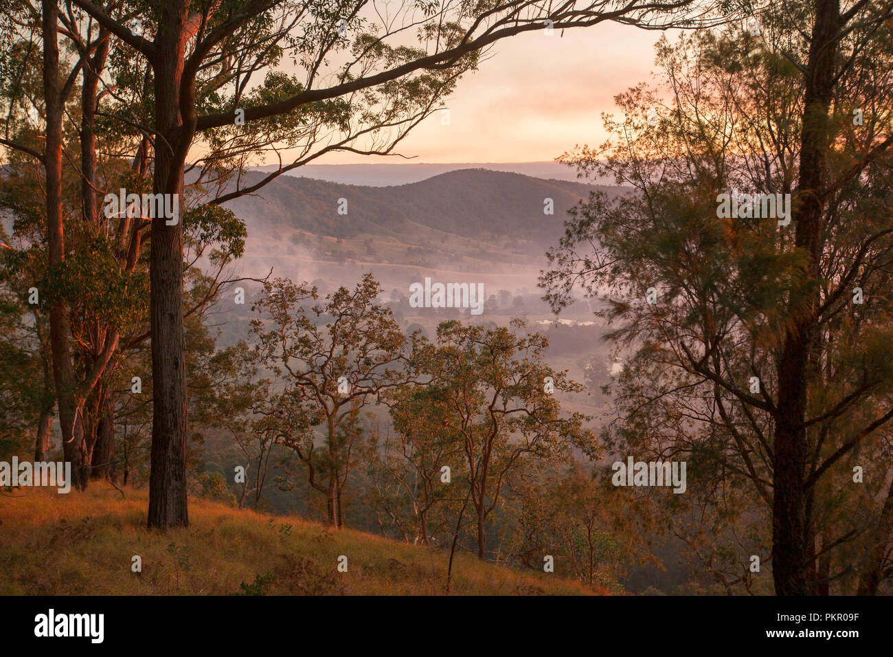 Sunrise with golden sky and mist lying in valley below forest at Tooloom National Park, NSW Australia. - Stock Image