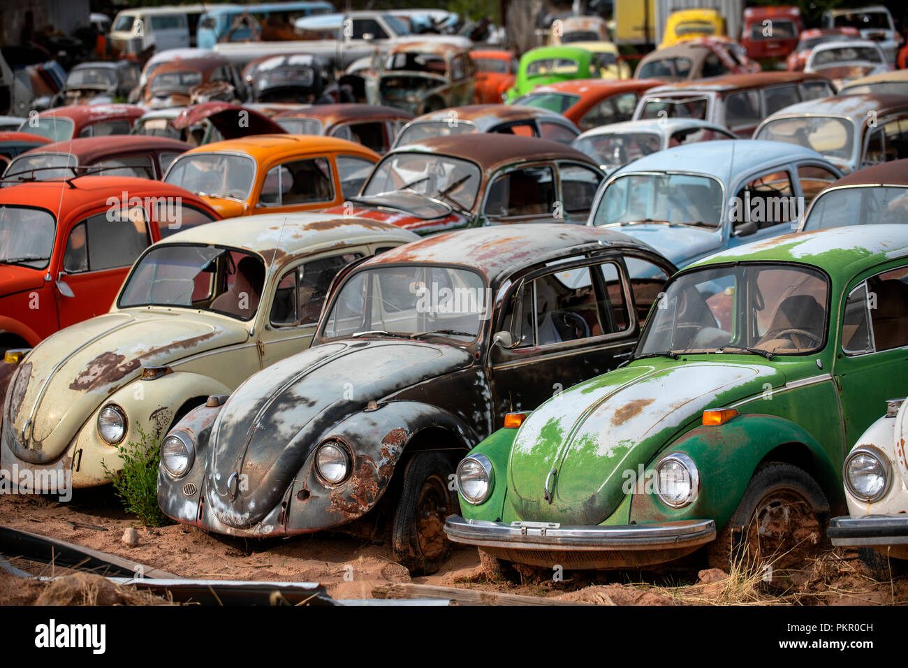 Abandoned Beetle Stock Photos & Abandoned Beetle Stock Images - Alamy
