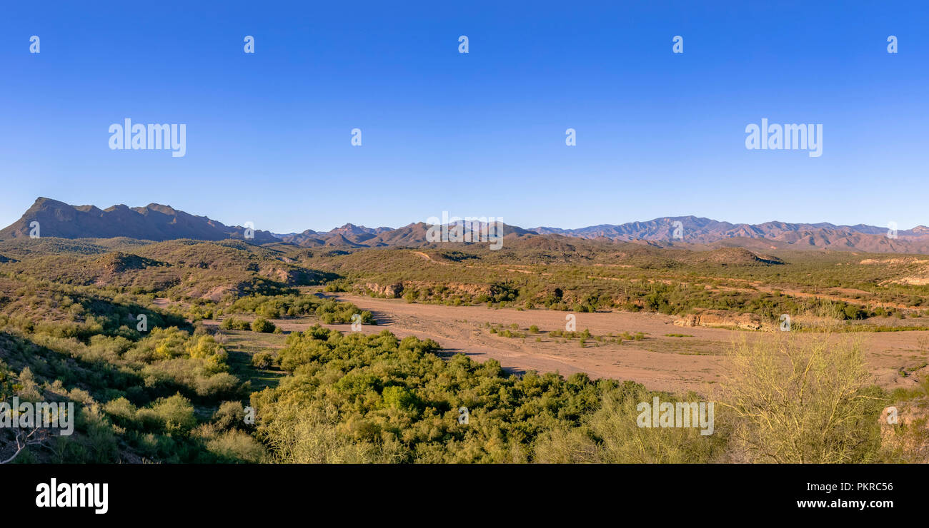 Grass and shrubs on mountain at sunny day - Stock Image