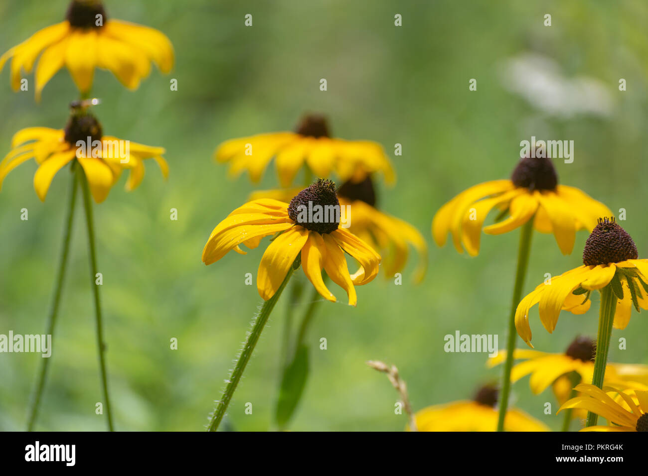Beautiful Yellow Flowers In A Field Of Green Grass And Plants Making