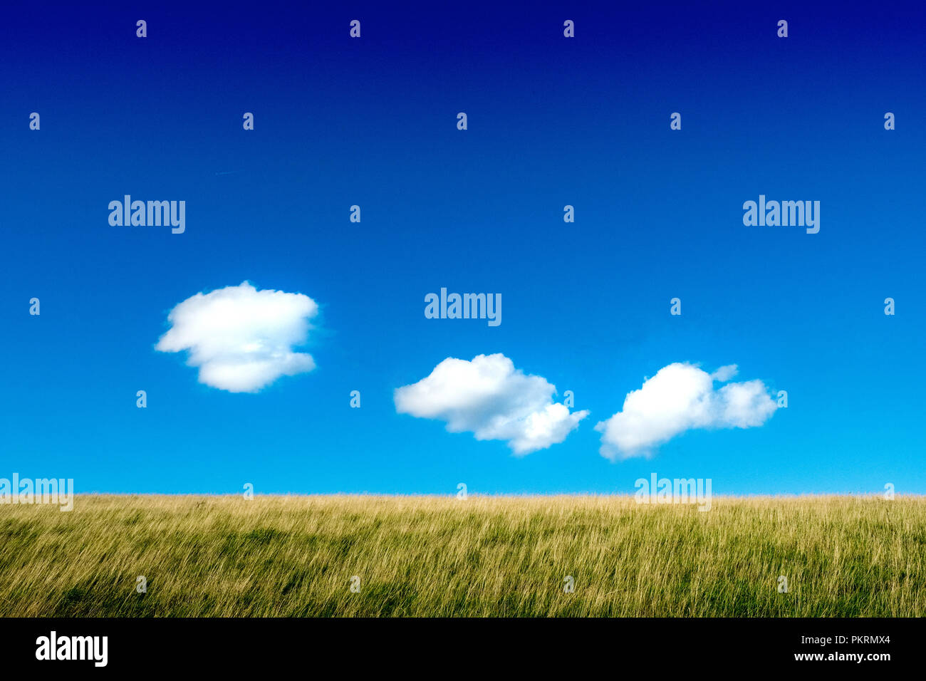 Blue sky and white ,fluffy clouds above grassy field, Peak District National Park - Stock Image