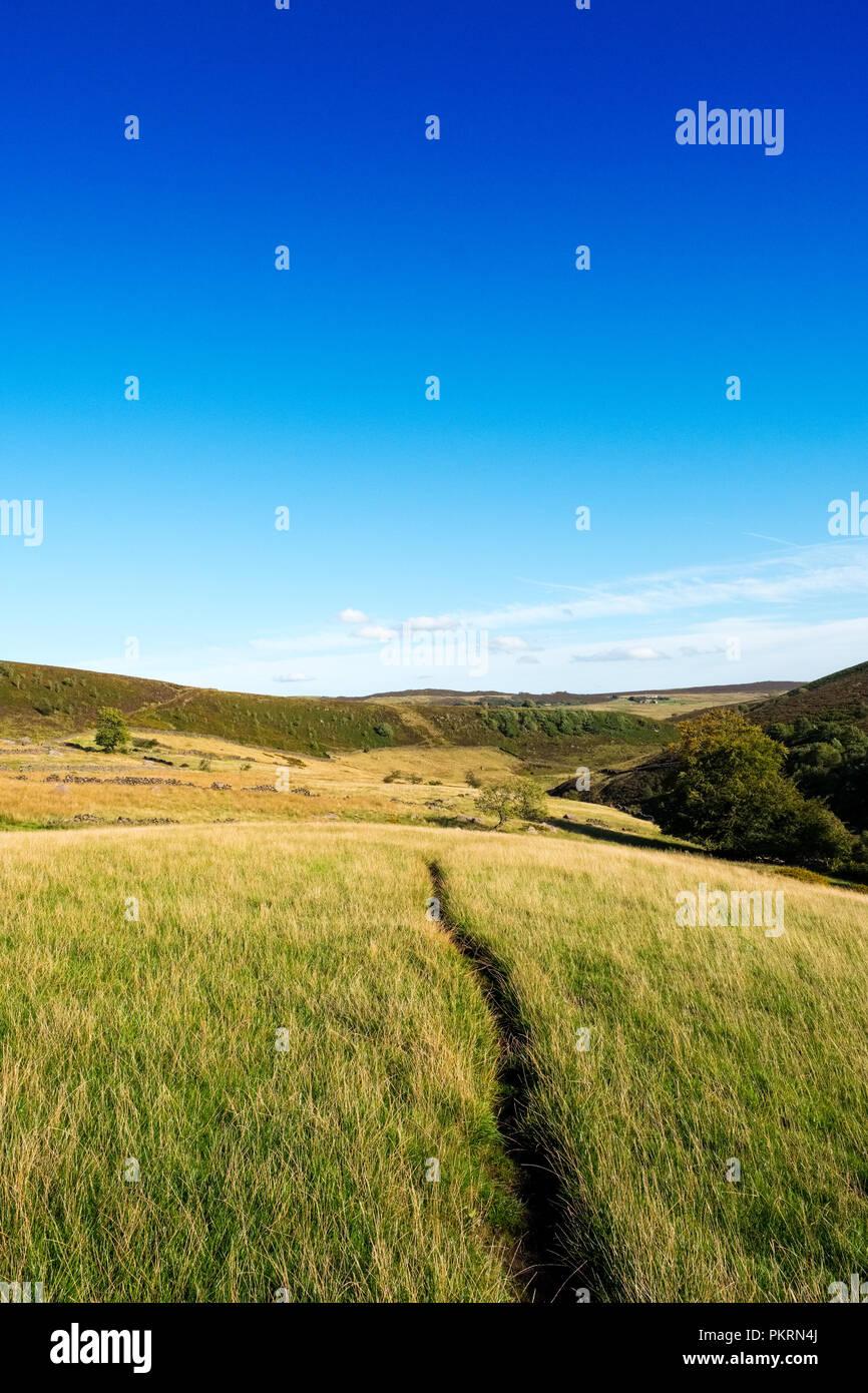 Path in grassy field near Gradbach, Staffordshire Moorlands,Peak District National Park - Stock Image