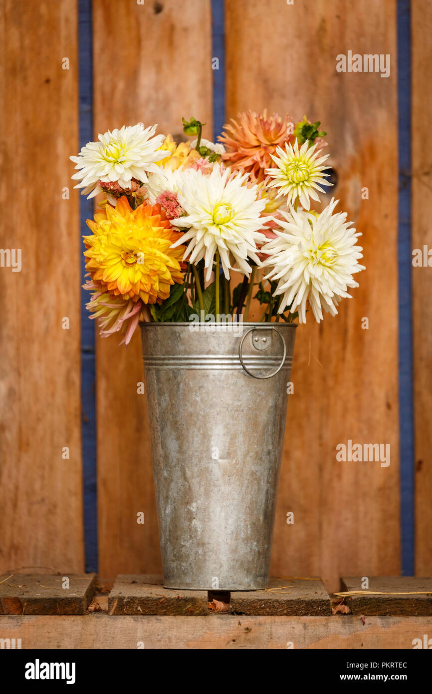 Simple Rustic Country Style Fall Autumn Thanksgiving Season Floral Dahlia Bouquet In Galvanized Metal Vase Home Decorations Stock Photo Alamy