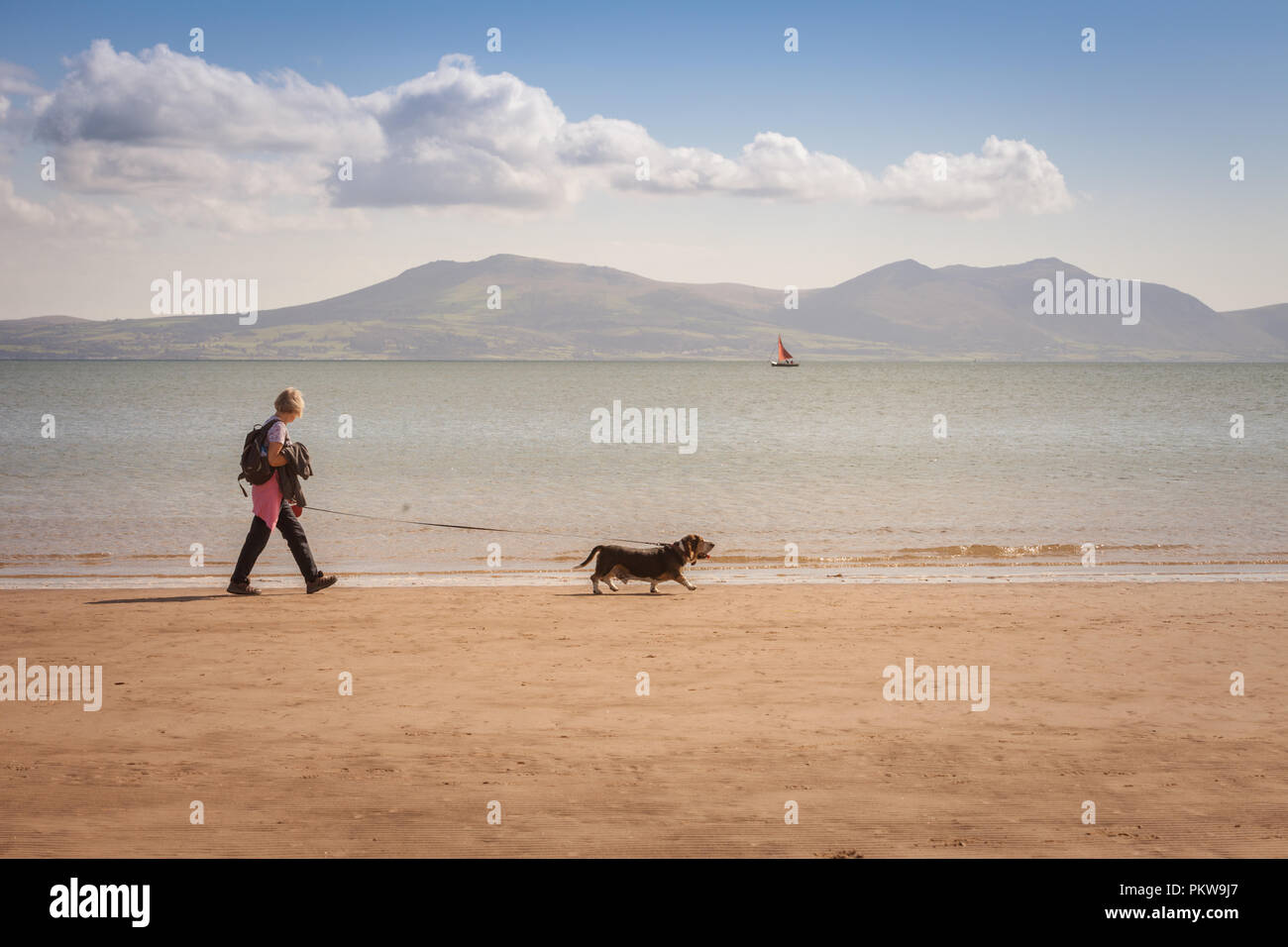 Woman walking a dog on a quiet sandy beach, Anglesey, Wales UK - Stock Image