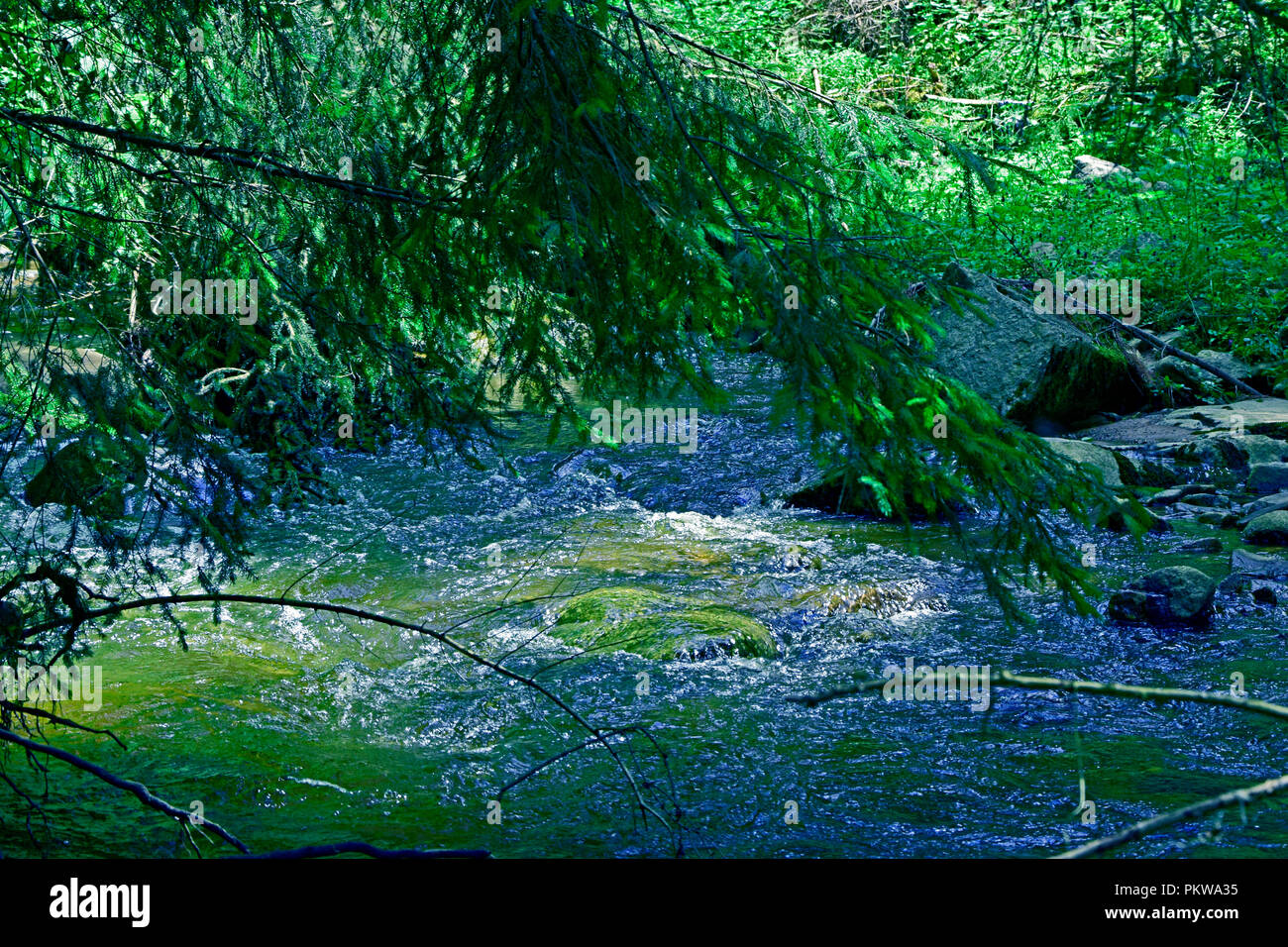 Green shadow cast by spruces on the crystal-clear water of a fast streaming brook - Stock Image