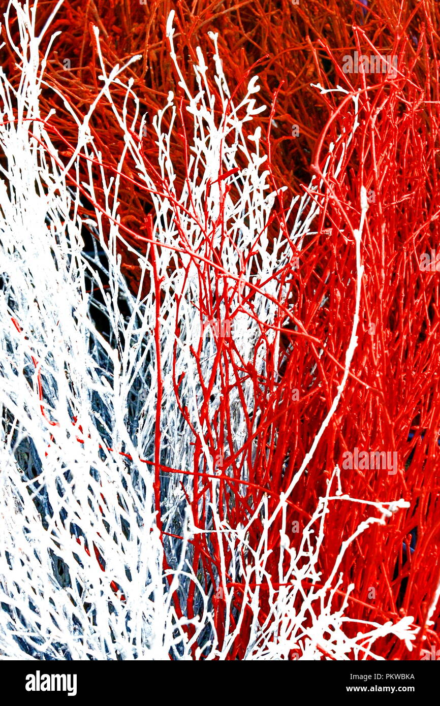 Red and white branches abstract natural background - Stock Image