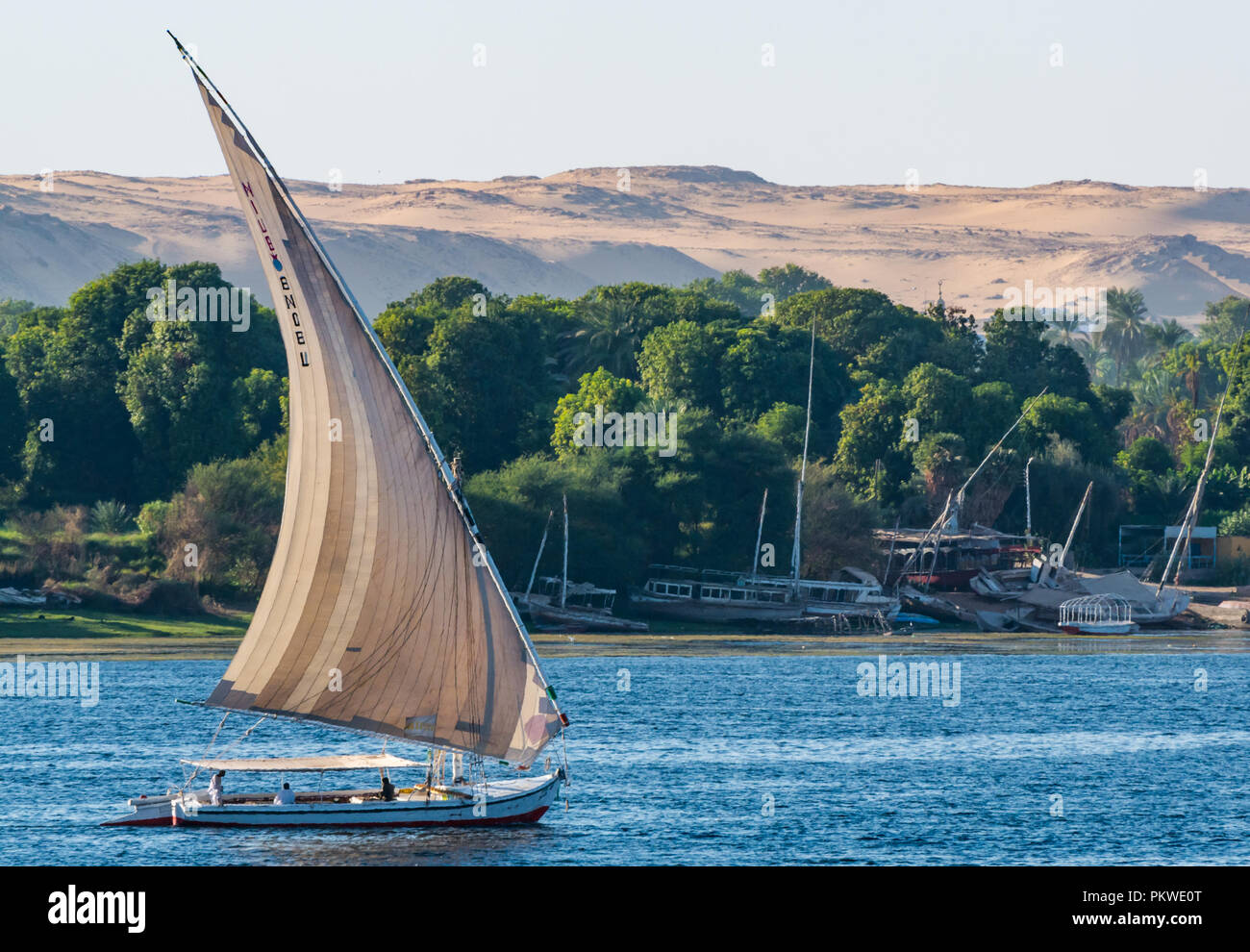 Traditional felucca sailing boats, River Nile with trees on riverbank and desert cliffs in distance in dusk light, Aswan, Egypt, Africa - Stock Image