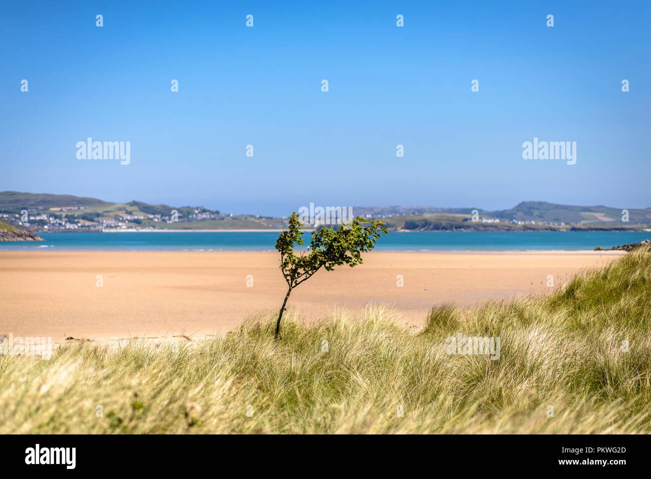 single Tree and Ocean Stock Photo