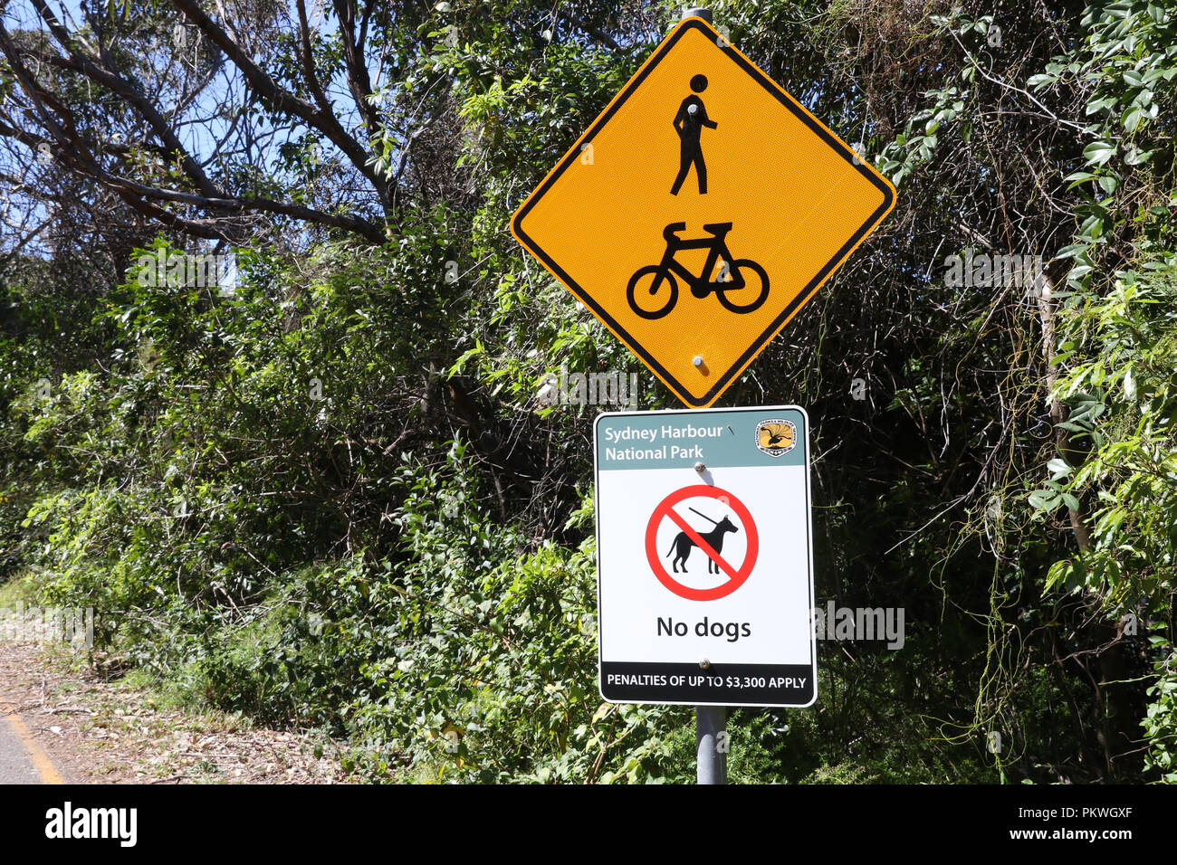 Australian road sign (W6-9) Pedestrians and Cyclists and Sydney Harbour National Park no dogs sign on Chowder Bay Road, Mosman. - Stock Image