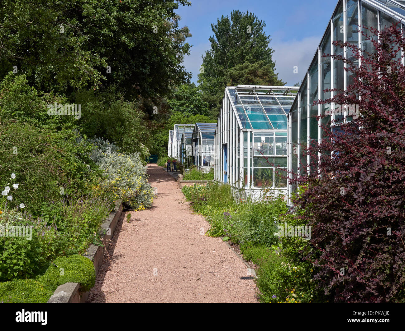 A row of Glasshouses next to a quiet Red Cinder Path within St Andrews Botanic Gardens in Fife, Scotland on one Summers Day. - Stock Image