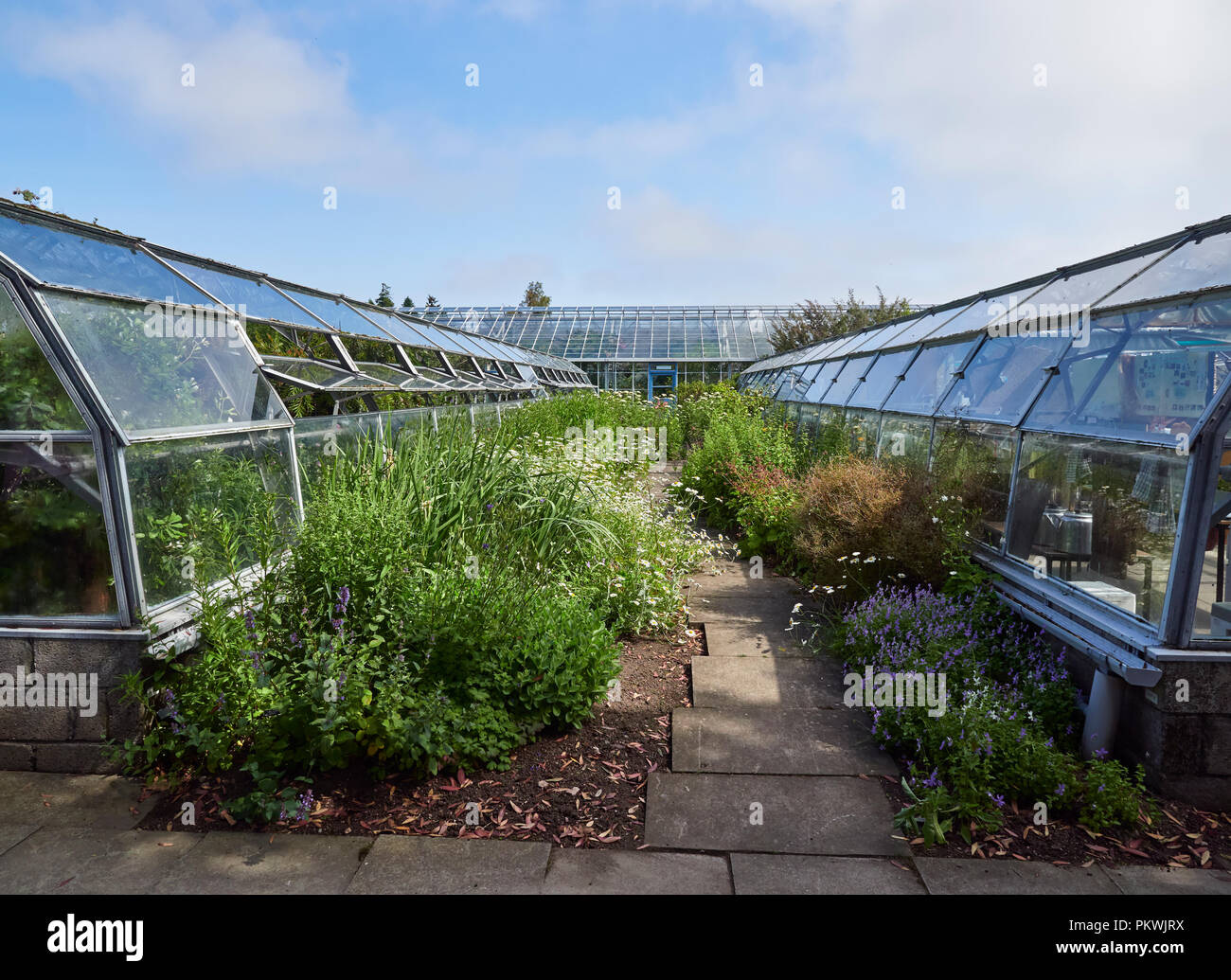 Looking between the rows of Glasshouses at the Saint Andrews Botanic Gardens Mediterranean exhibition of Plants, in St Andrews, Fife in Scotland. - Stock Image