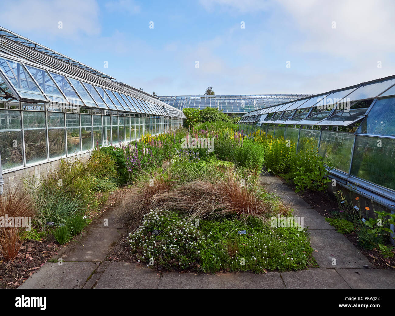Looking at the Plant Borders between the Rows of Glasshouses at St Andrews, Botanic Garden in Fife in Scotland. - Stock Image