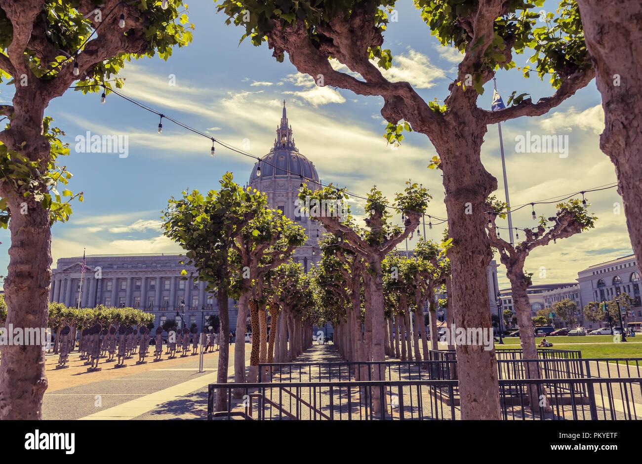 PlantFiles Pictures: Platanus, London Planetree, Plane ...  San Francisco City Hall Trees