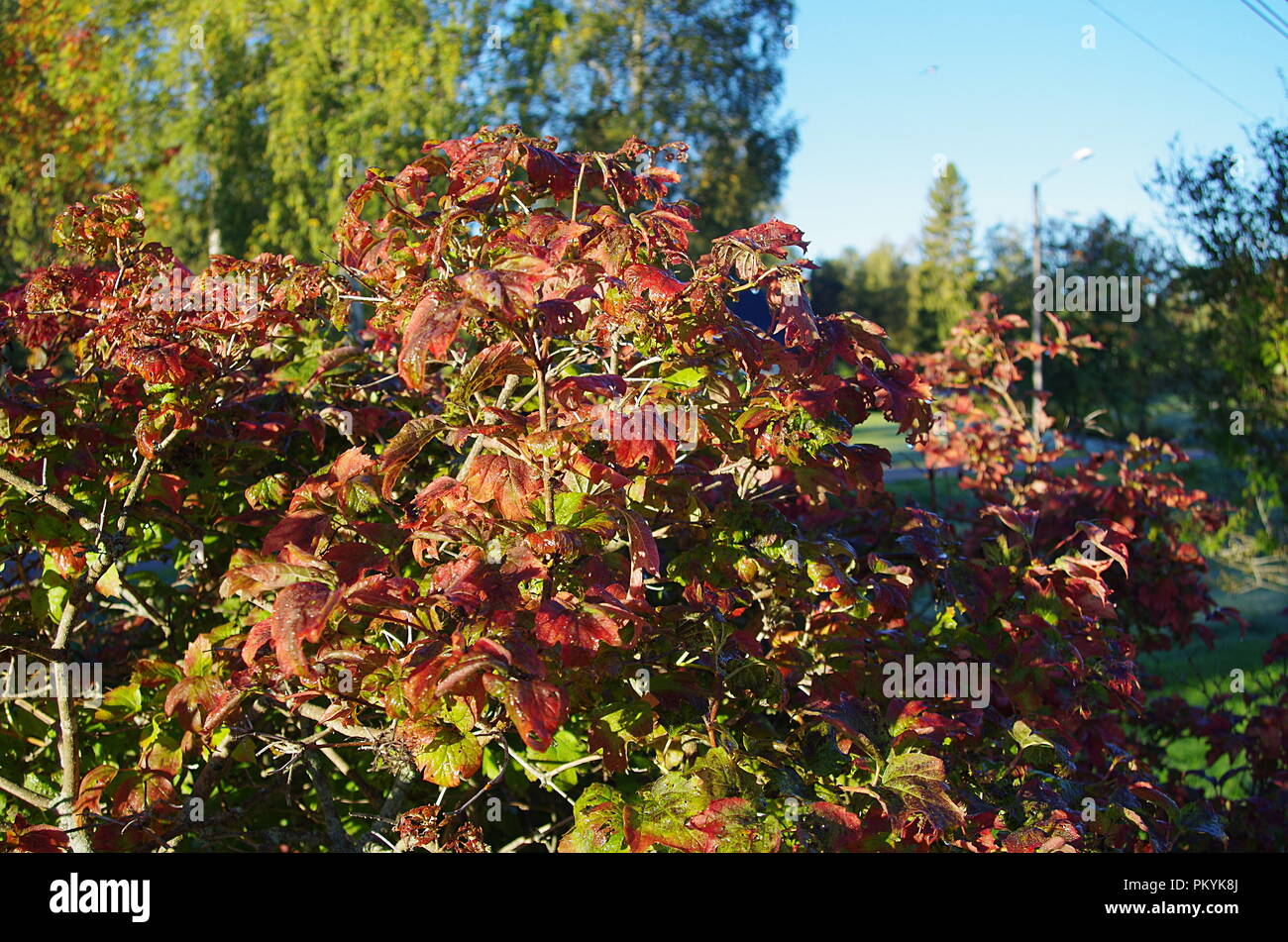 Beautiful autumn colours in forests,rivers and gardens in rural Dalarna. - Stock Image