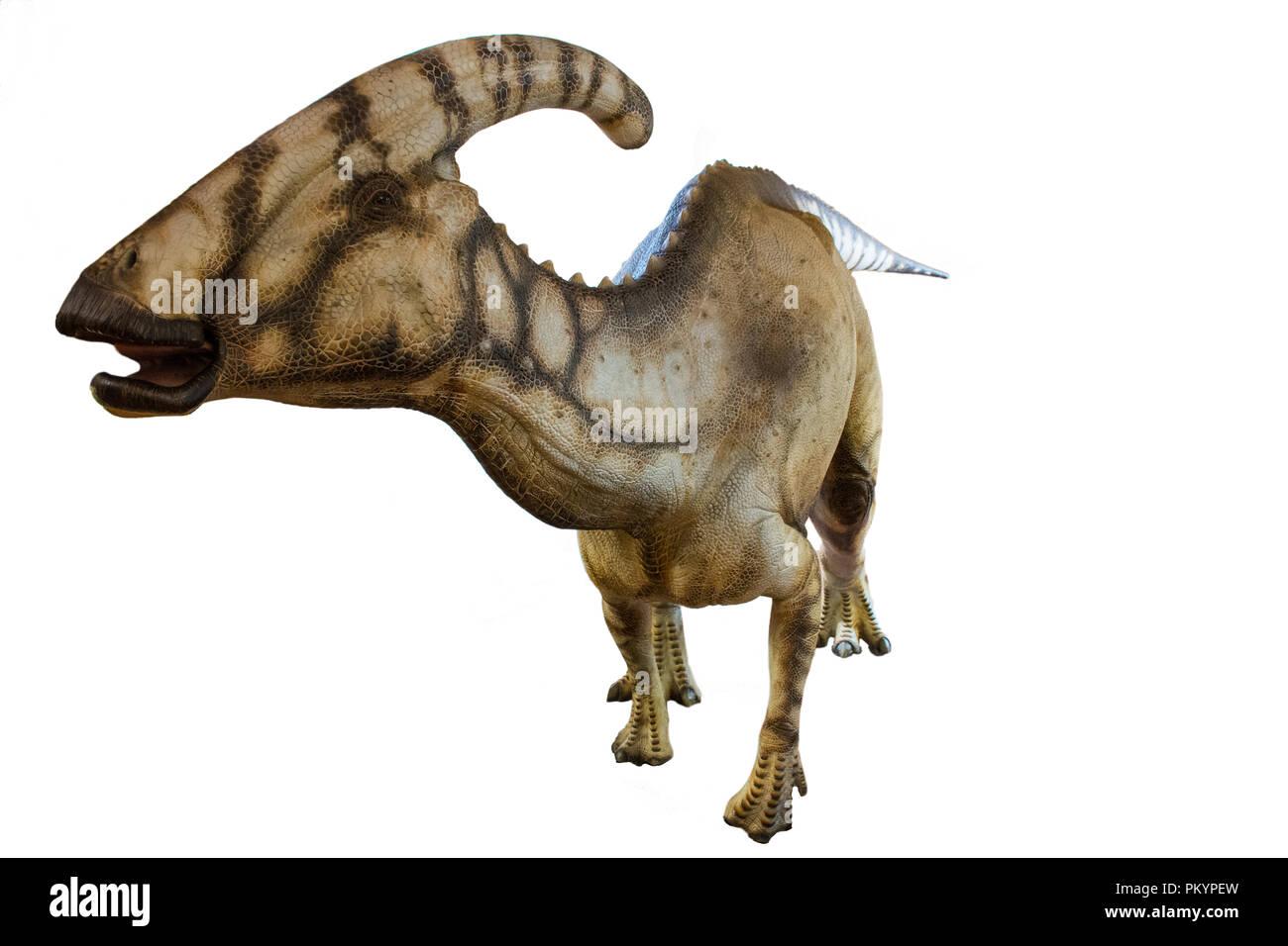 Parasaurolophus isolated on white background - Stock Image