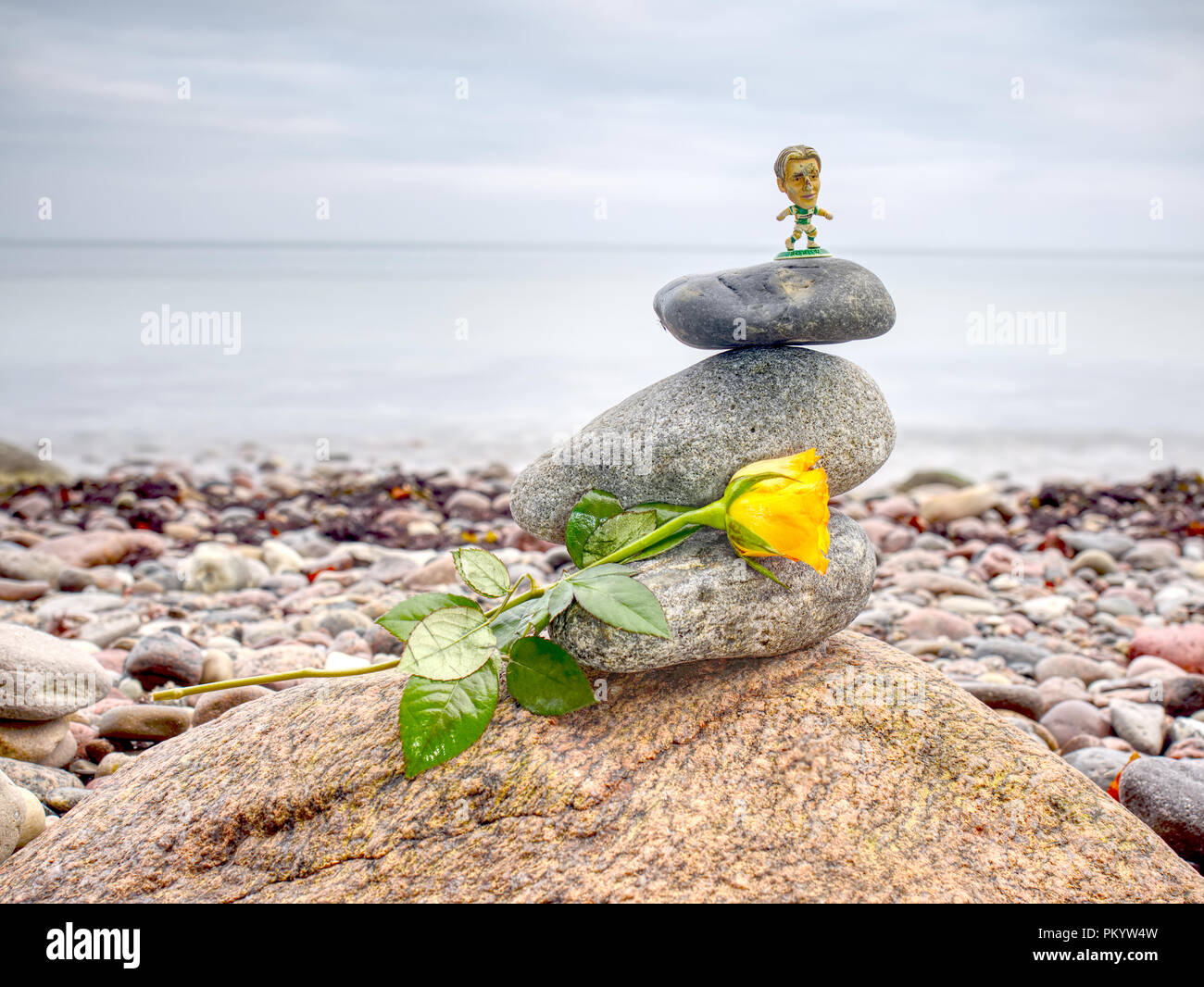 Yellow rose on stack of stones on beach - nature background. Pebbles stack in peaceful evening with smooth ocean background. - Stock Image