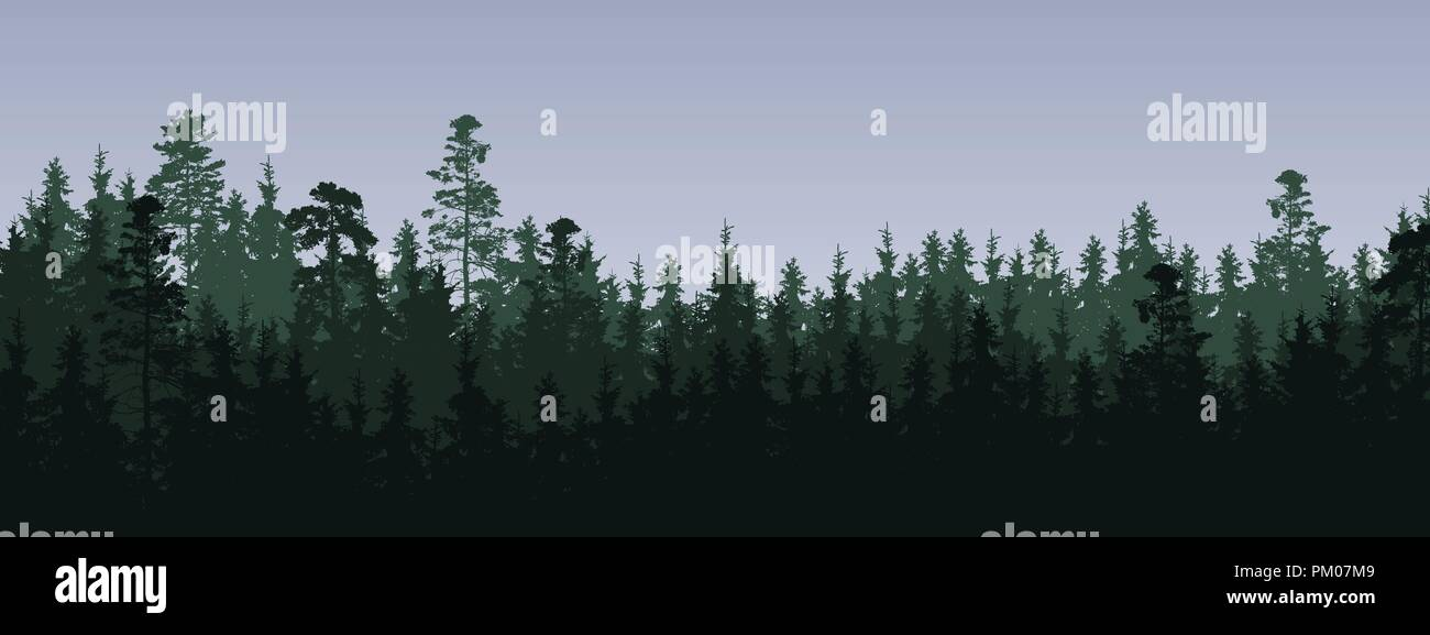 wide screen vector illustration of a green coniferous forest with spruces and pines in three layers, under a gray cloudy sky - with space for text - Stock Vector