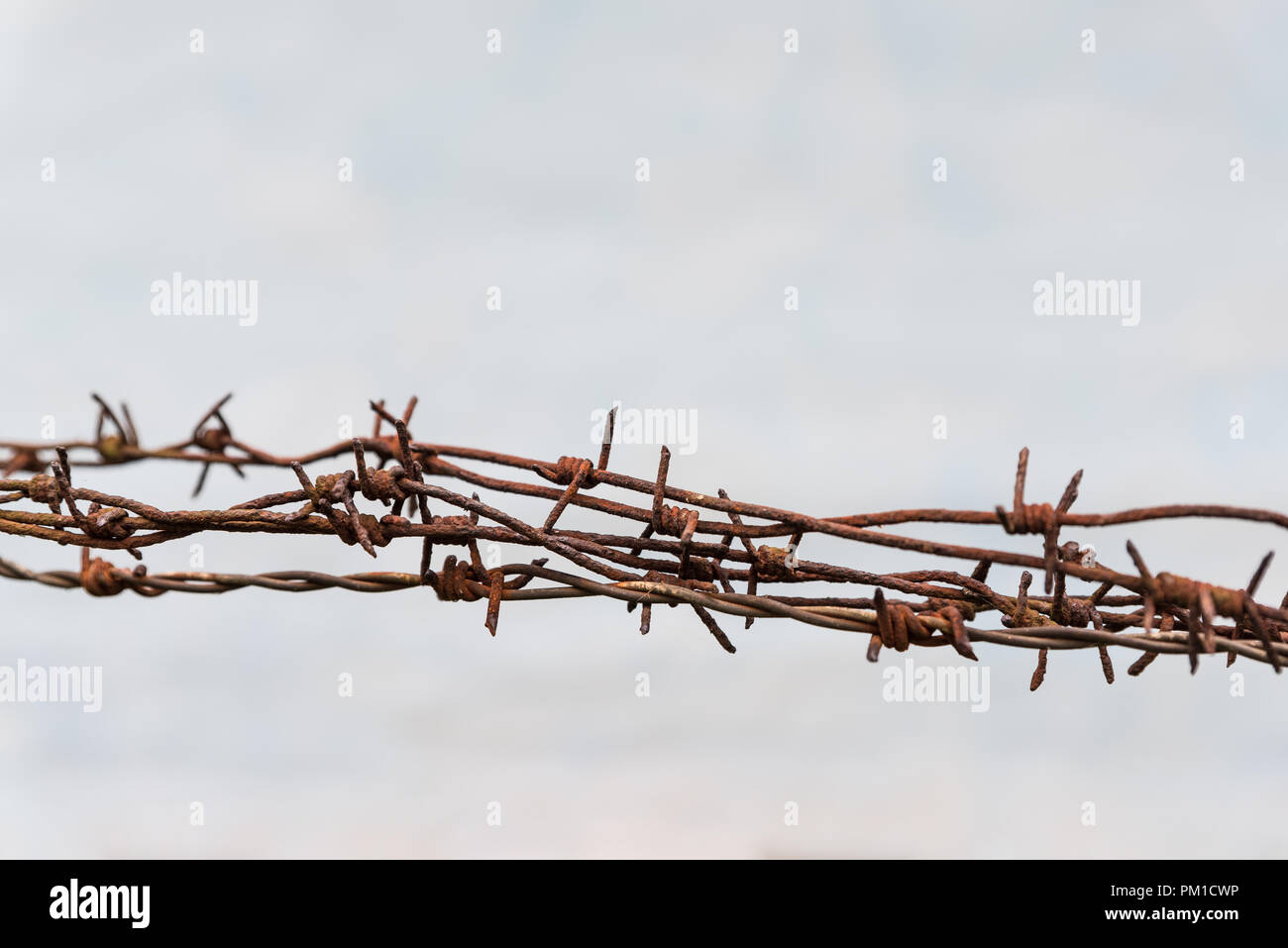 Rusty barbed wires, old wall white background, copy space for text, imprisonment - Stock Image