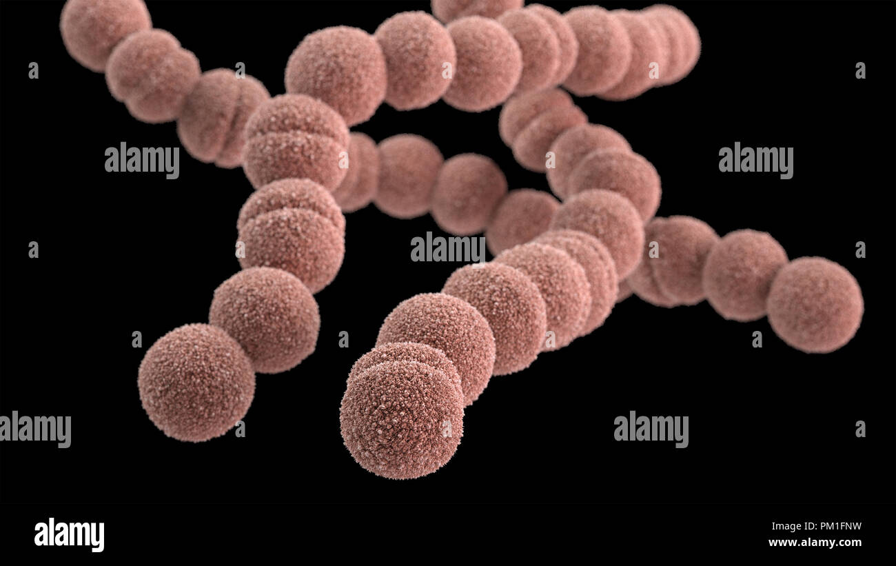 3D computer-generated image of a group of Gram-positive, Streptococcus pyogenes  bacteria. - Stock Image