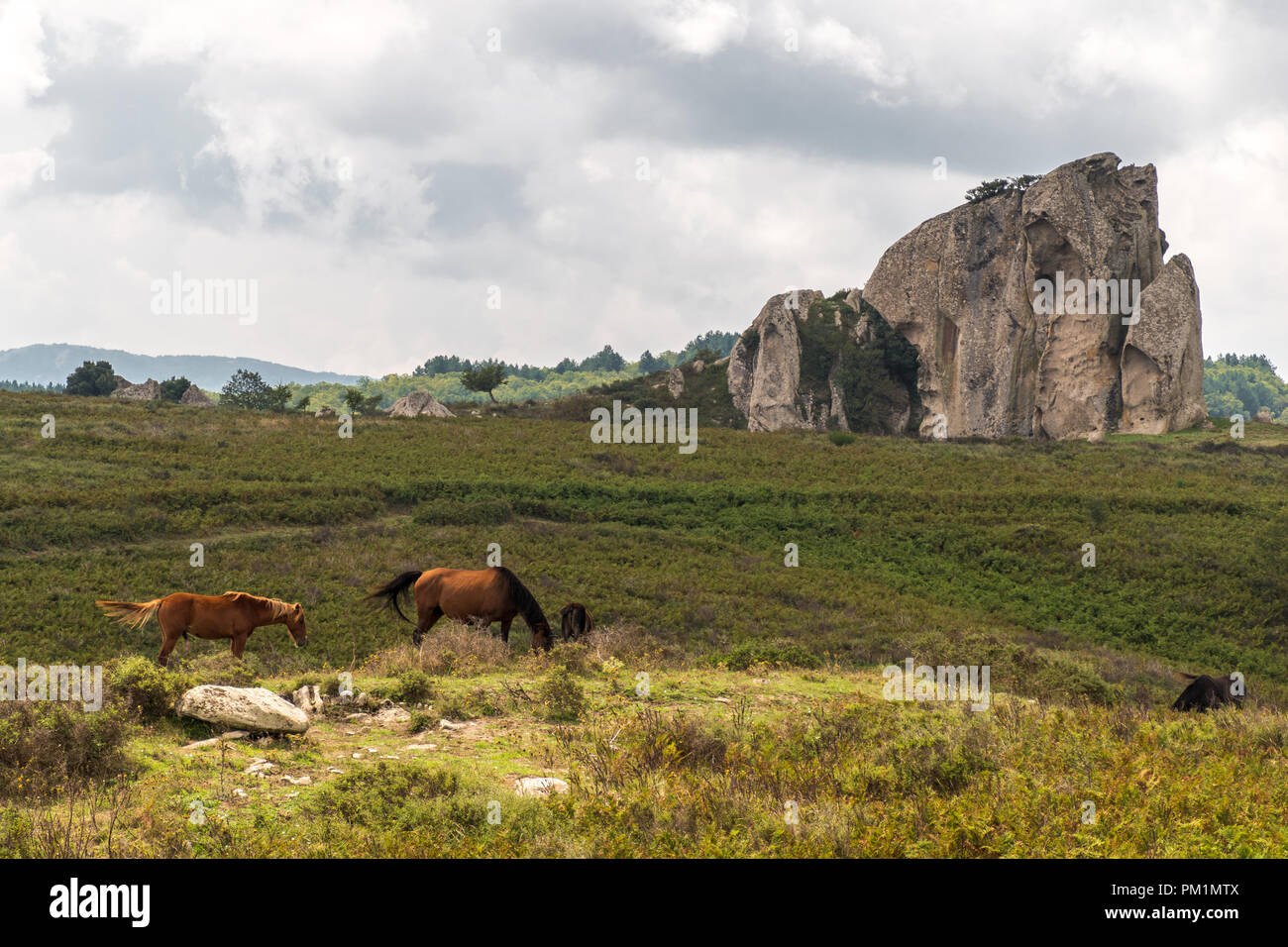 Horses pasturing in the plateau of Argimusco, in Sicily, with a natural megalith in the background - Stock Image