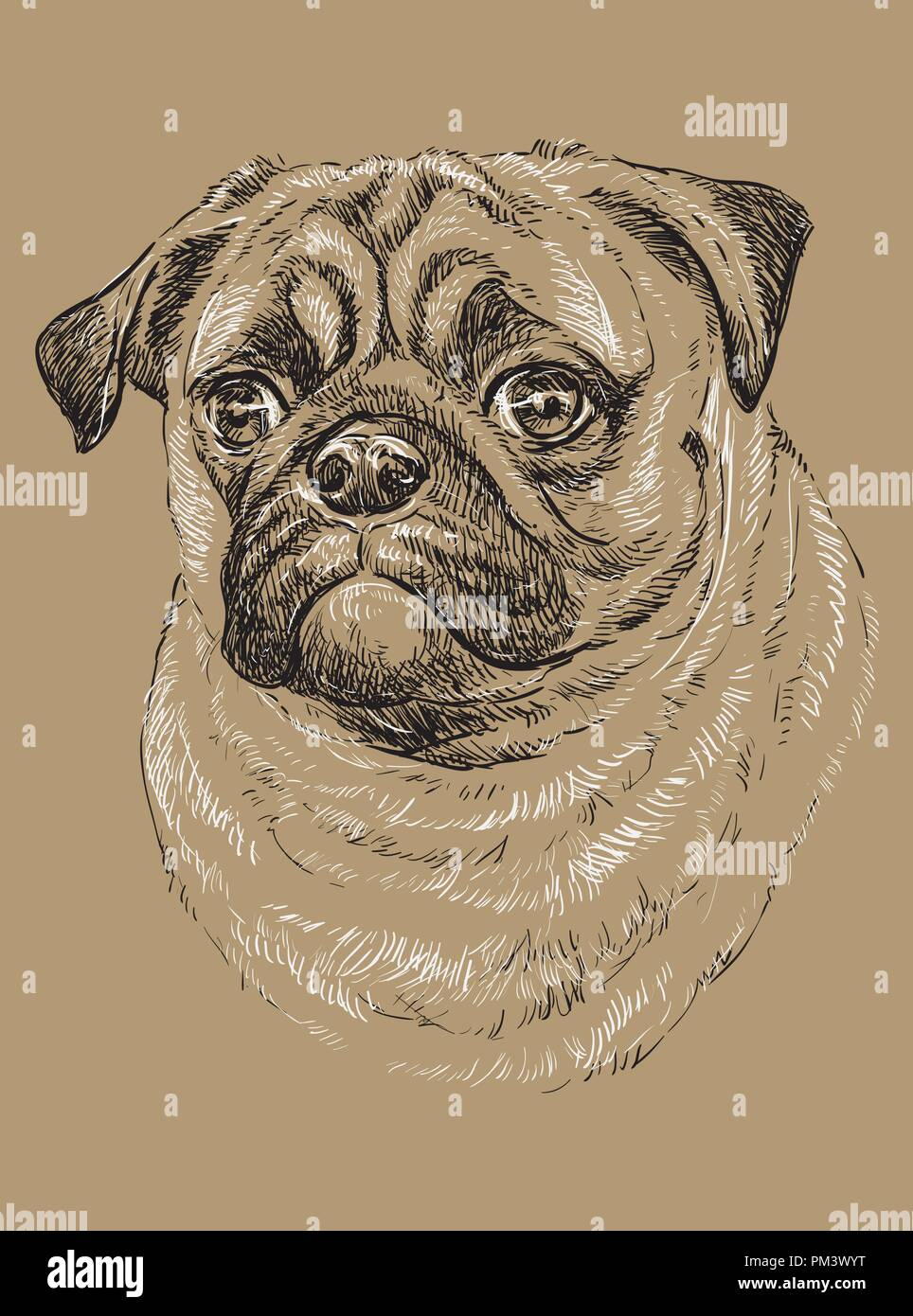 54d6b4d468d0 Pug vector hand drawing black and white illustration isolated on beige  background - Stock Image