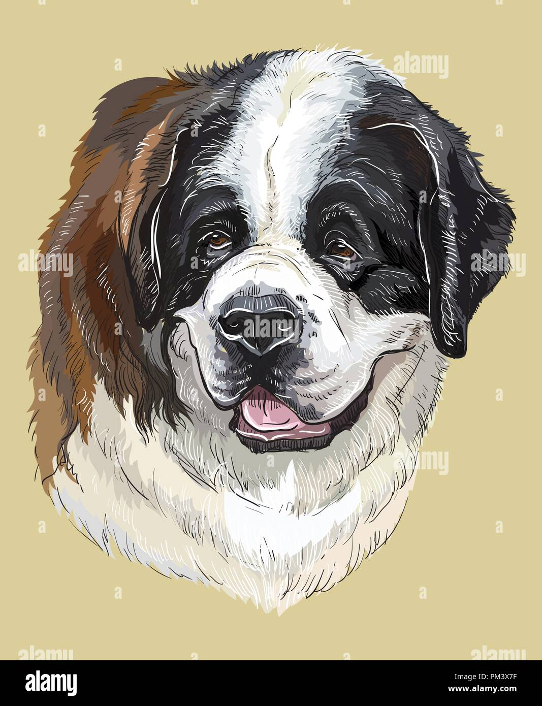 st bernard vector hand drawing illustration in different color on
