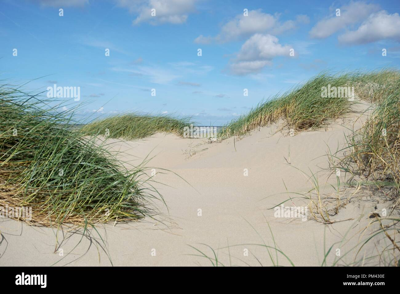 sand dune with grass at the noth sea - Stock Image
