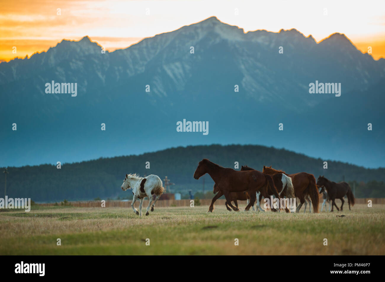 Beautiful bay horse herd grazes in the mountains at sunset, amazing hipster sunny natural background. - Stock Image