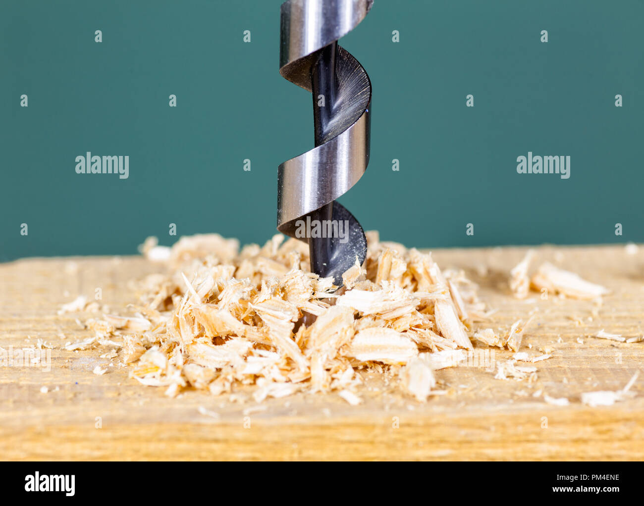 Wood drill bit with shavings - Stock Image