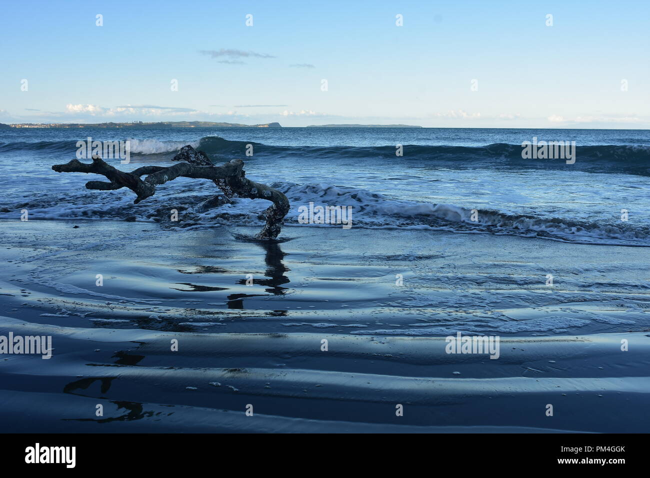 Piece of driftwood on sandy oceanic beach washed by surf with layer of white foam on water surface. - Stock Image