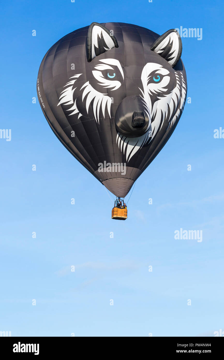 Wes the Wolf hot air balloon in the sky at Longleat Sky Safari, Wiltshire, UK in September - Stock Image