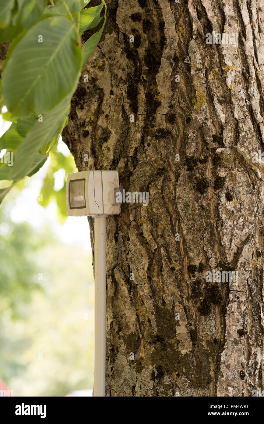 tree with electrical outlet - Stock Image