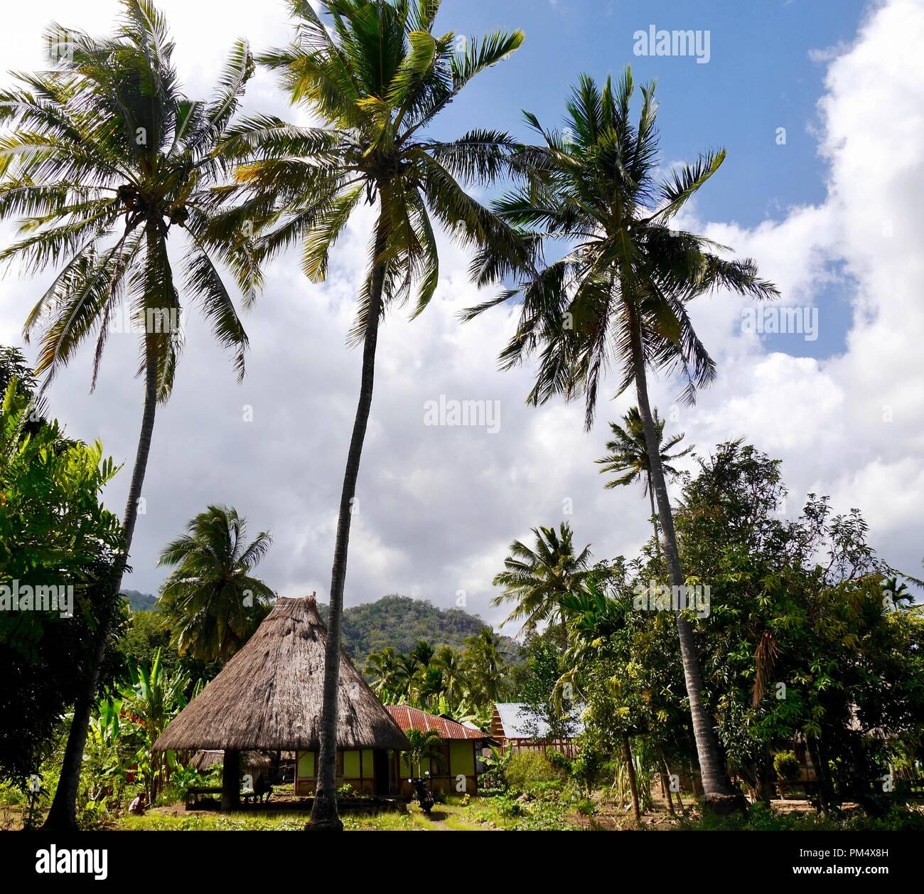 Simple traditional house in countryside on Indonesian island of West Timor with tall palms in foreground and mountains beyond - Stock Image