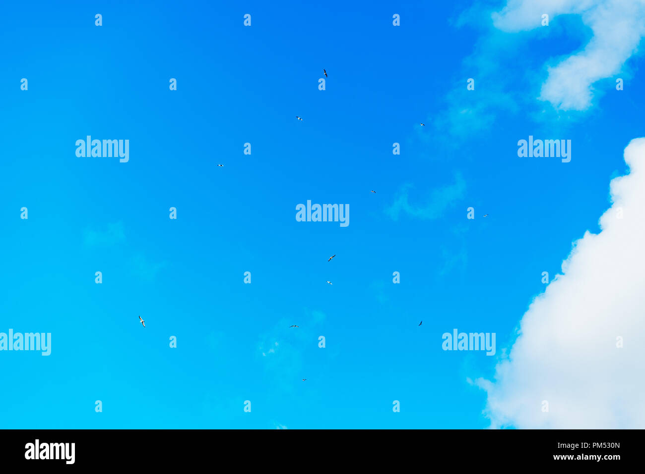 Perfect clear blue sky with white fluffy clouds during daytime - Stock Image