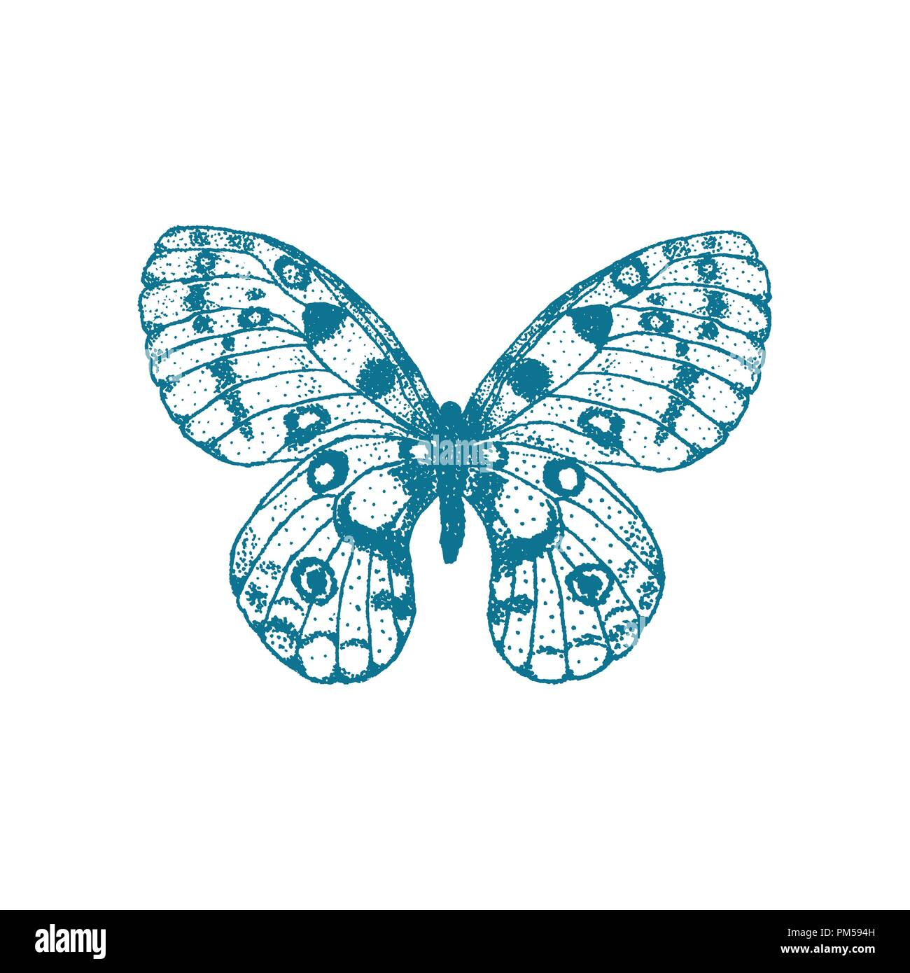Vector  hand drawn blue butterfly on white background. Parnassius apollo butterfly - Stock Vector
