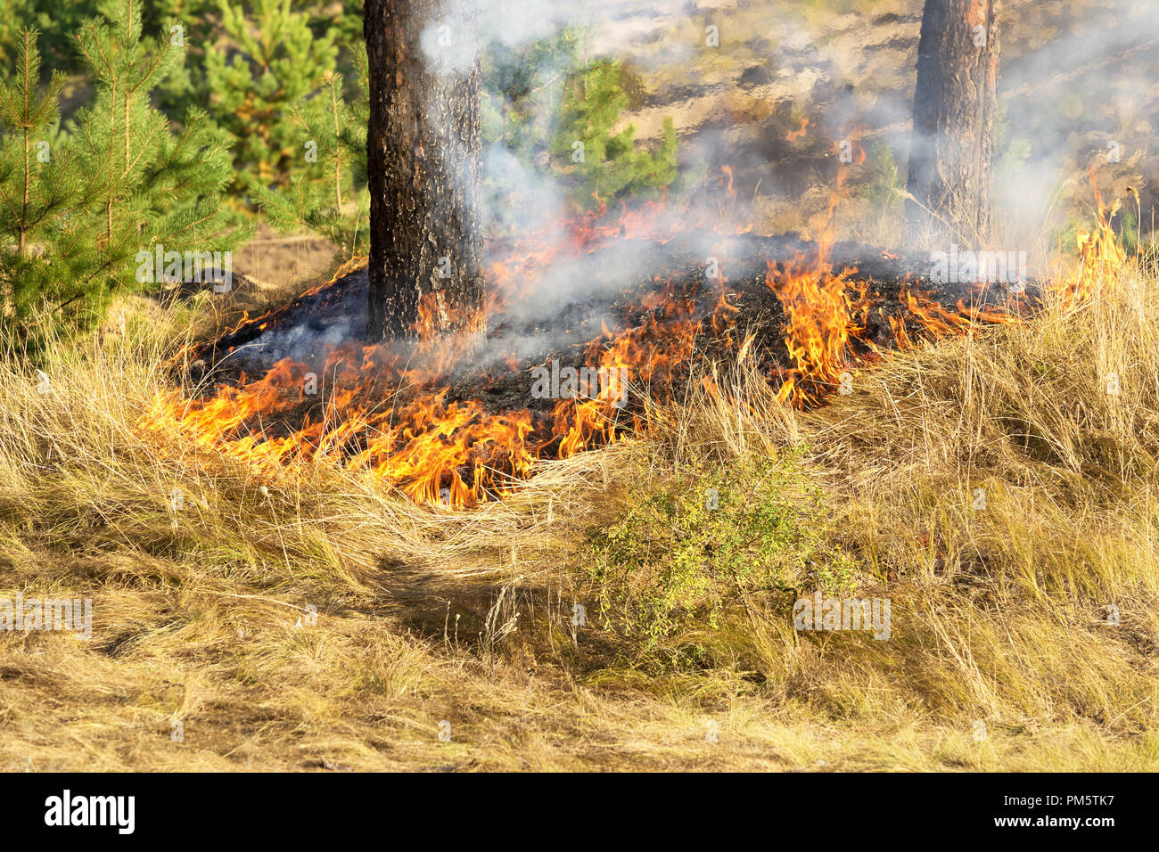 Fire in the forest in the hot summer - Stock Image