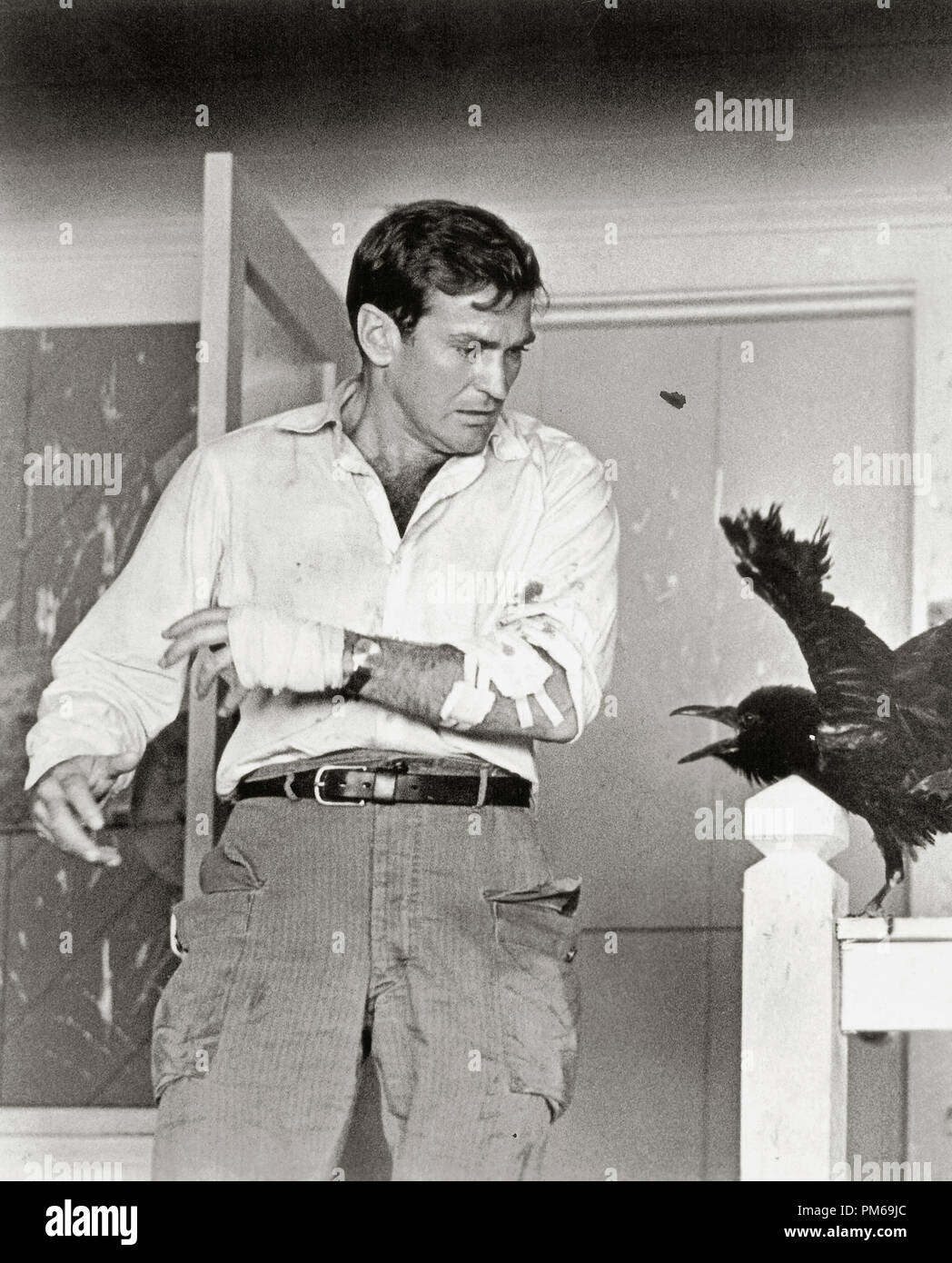 Rod Taylor, 'The Birds' 1963 Universal File Reference # 31316_330THA - Stock Image