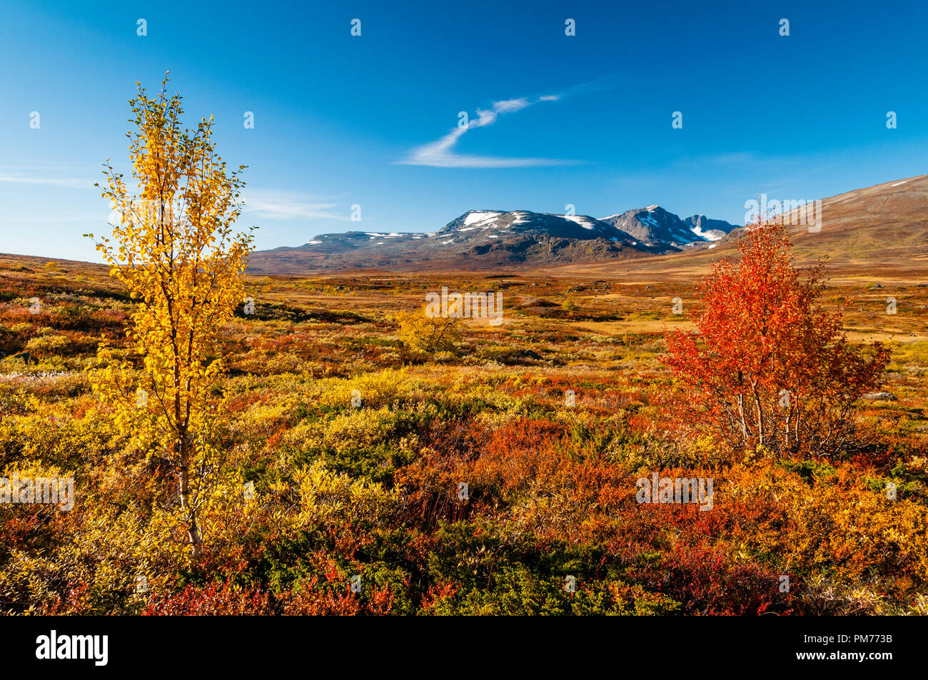 Autumn colours in the Norwegian mountains - Stock Image