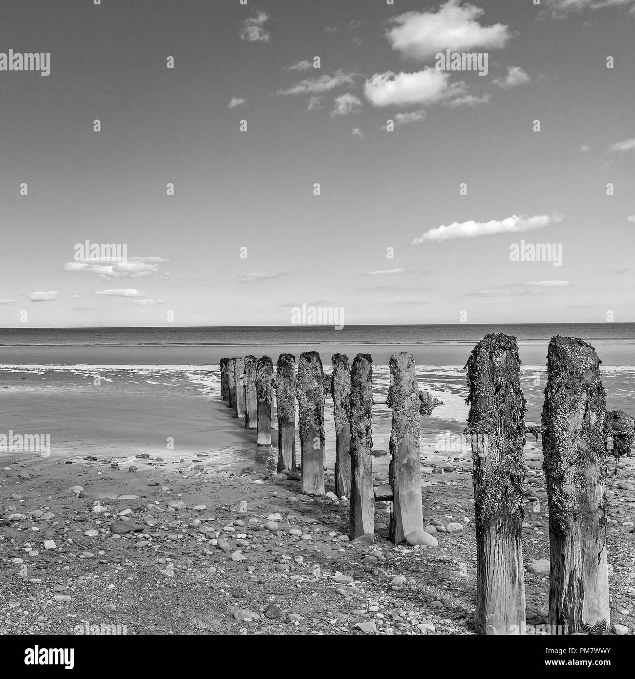 Old and barnacle crusted breakwater posts on a pebble strewn beach reach down towards the sea. A blue sky with clouds is above. Stock Photo
