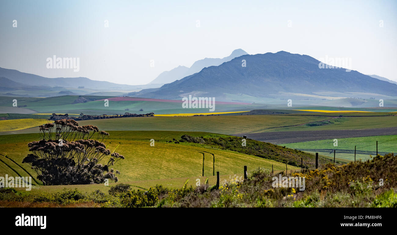 Kleinrivier mountains, Western Cape, South Africa Stock Photo