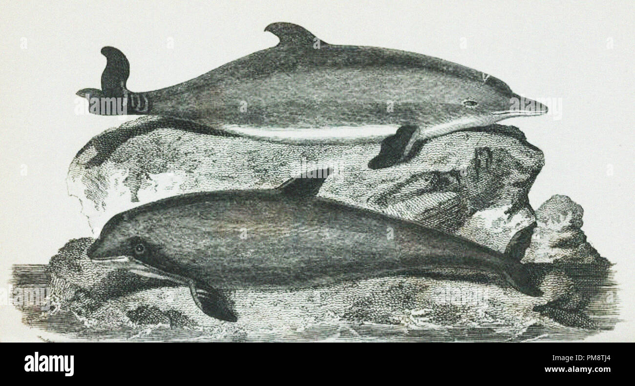 dolphins - Stock Image