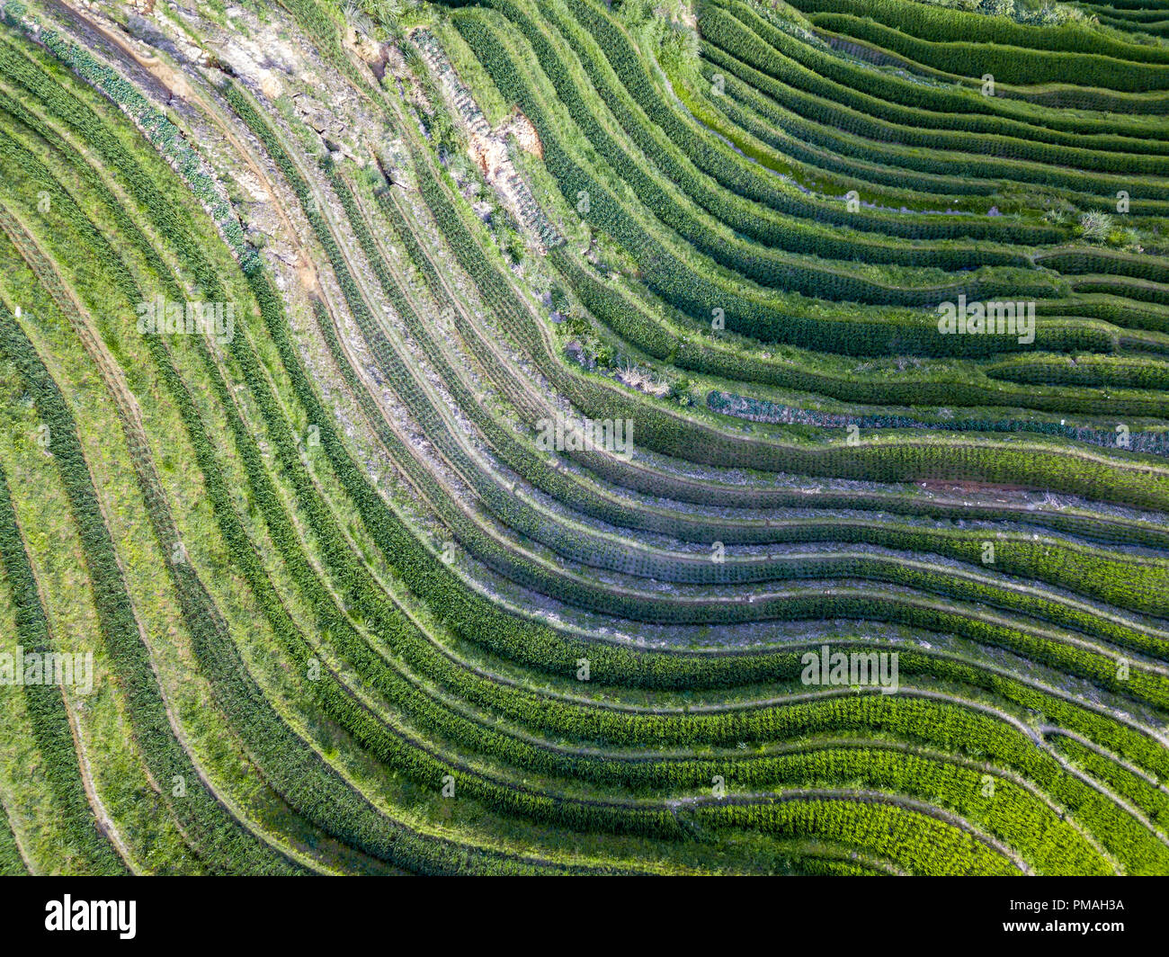 Longji Terraced Rice Fields means Dragon's Backbone (Longji). The rice terraces resemble a dragon's scales, while the peaks of the mountain range rese - Stock Image