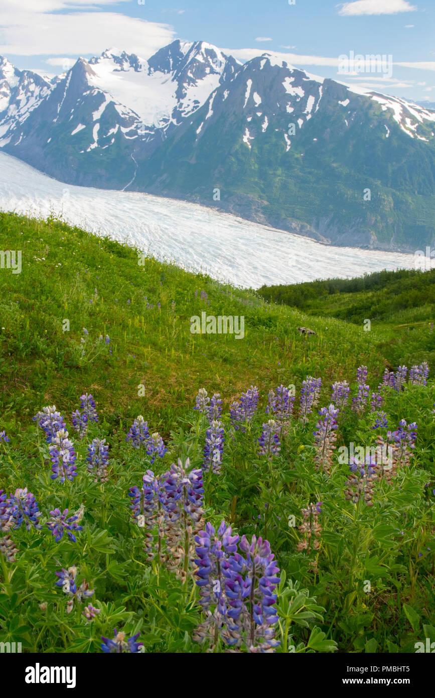 Spencer Glacier Bench, Chugach National Forest, Alaska. - Stock Image