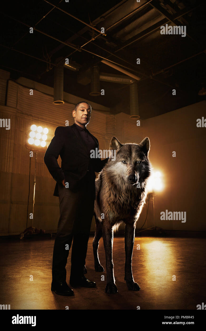 THE JUNGLE BOOK - Akela is the strong and hardened alpha-male wolf who shoulders the responsibility of his pack. He welcomes Mowgli to the family, but worries he may one day compromise their safety. 'Akela is a fierce patriarch of the wolf pack,' says Giancarlo Esposito, who voices the character. 'He believes the strength of the pack lies in what each and every wolf offers. He's a great leader, a wise teacher.'  Photo by: Sarah Dunn. ©2016 Disney Enterprises, Inc. All Rights Reserved. - Stock Image